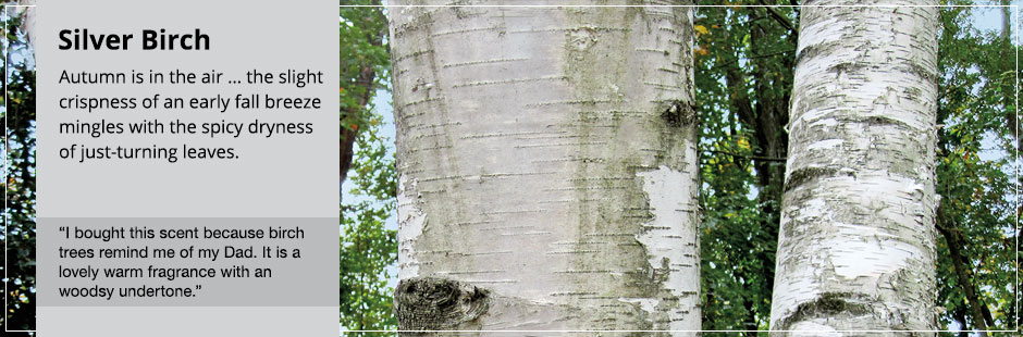 Silver Birch: the slight crispness of an early fall breeze mingles with the spicy dryness of just-turning leaves.
