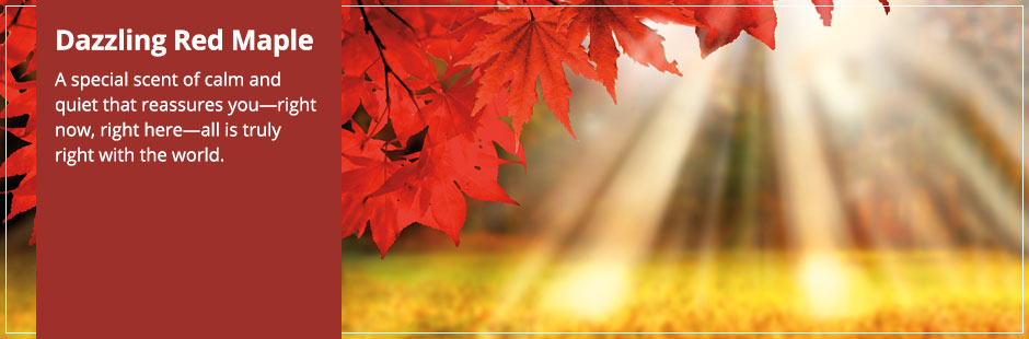 Dazzling Red Maple: A special scent of calm and quiet that reassures you all is truly right with the world.